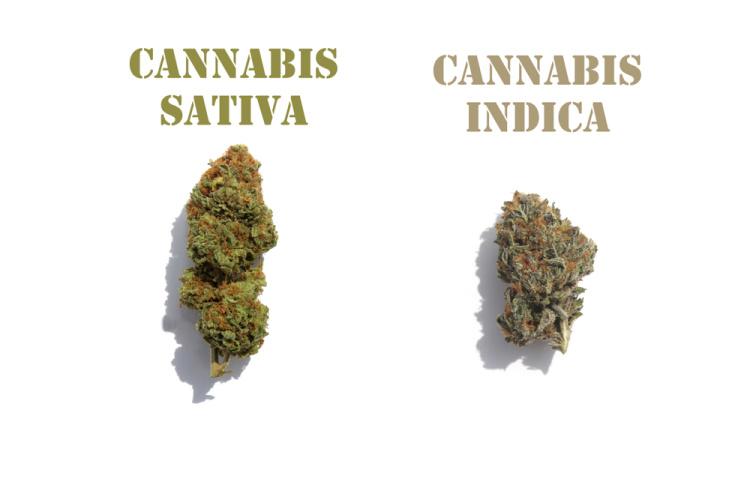 how to buy marijuana 3