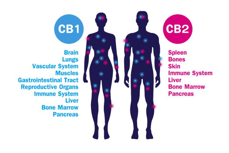 cannabis for pain 1